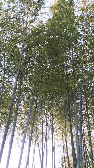 竹の写真、重鎮先生の例え